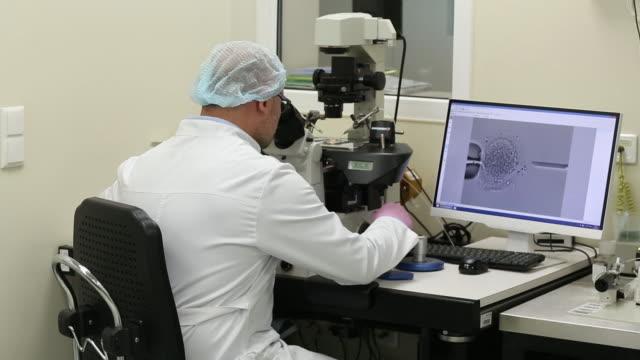 doctor denis rebrikov and senior researcher anastasia kirillova work with oocytes at laboratory of the kulakov national medical center for... - human fertility stock videos & royalty-free footage