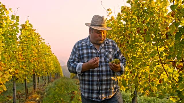 TS documentario su Winegrowing