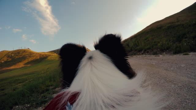 Hund POV :  Abenteuer in den Dolomiten