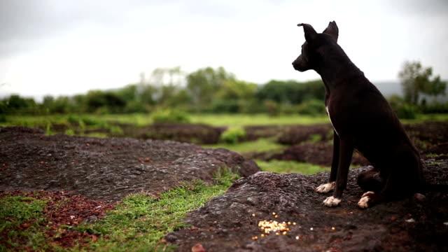 dog alertness - hound stock videos & royalty-free footage