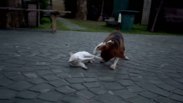 dog and cat - dog and cat stock videos and b-roll footage