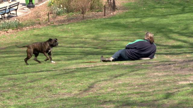 stockvideo's en b-roll-footage met dog and owner relaxing - central park nyc - haar naar achteren