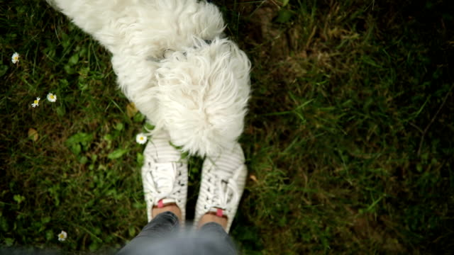 pov von hund und besitzer der füße - subjektive kamera ungewöhnliche ansicht stock-videos und b-roll-filmmaterial
