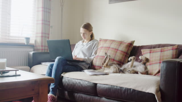 dog and woman on sofa - cushion stock videos & royalty-free footage