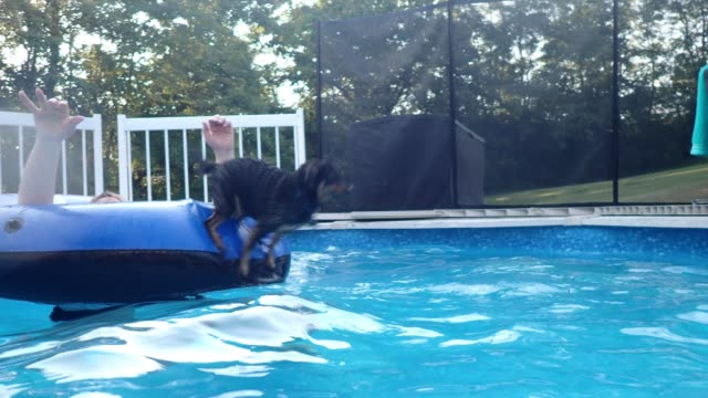 dog and woman swimming, playing and having fun in pool - reifenschlauch stock-videos und b-roll-filmmaterial