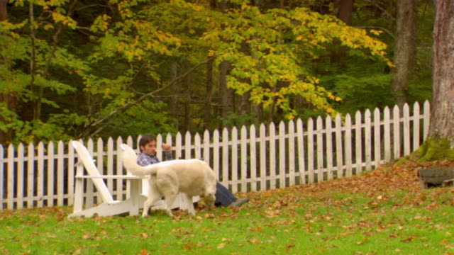 ws, dog assisting man using laptop in country house garden, phoenicia, new york, usa - アルスター郡点の映像素材/bロール