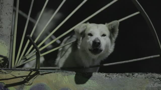 vídeos de stock, filmes e b-roll de dog barking - latindo