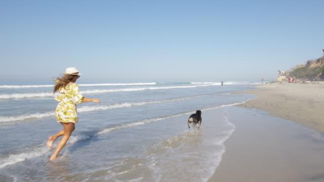 dog beach - beach stock videos & royalty-free footage