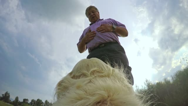 POV Dog being petted on the head by senior owner