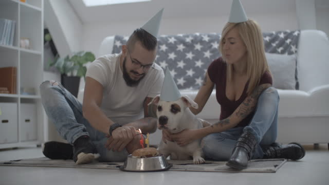 4k: dog birthday party. - party hat stock videos & royalty-free footage