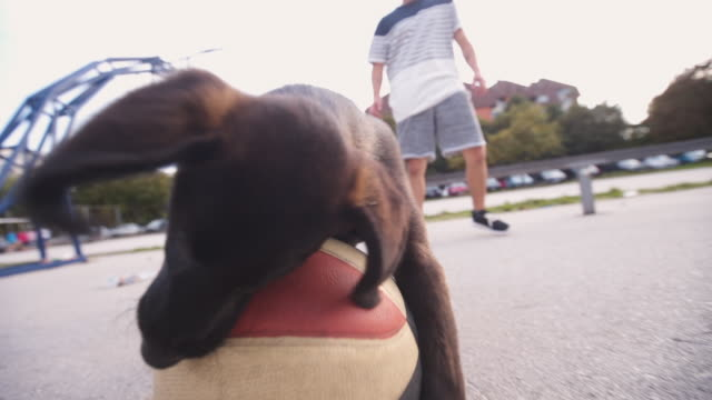 hund beißen basketball ball - fangen stock-videos und b-roll-filmmaterial