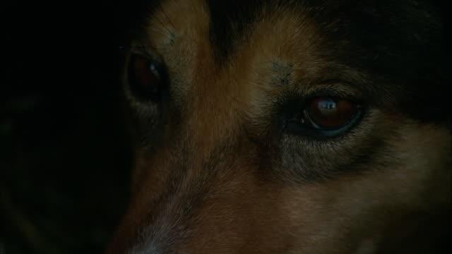 A dog blinks its eyes.