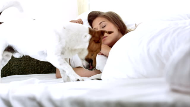 HD: Dog Bringing A Phone For Owner In Bed