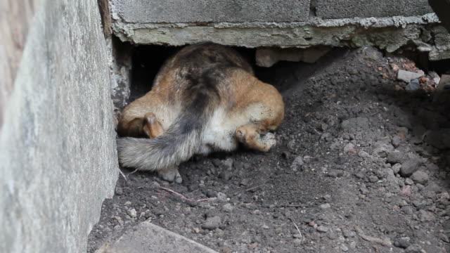 dog burrow underground - basement stock videos and b-roll footage