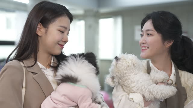 vídeos de stock, filmes e b-roll de dog cafe - young woman dog owner and employee looking each other with smile while embracing puppy - bichos mimados