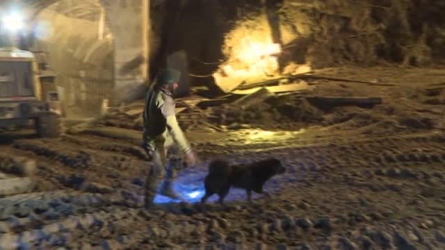 dog called 'blackie' stubbornly hangs around the entrance to a tunnel where rescuers are searching for people missing after india's glacier disaster.... - rescue worker stock videos & royalty-free footage
