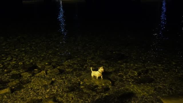 Hund um einen ball in das Meer bei Nacht