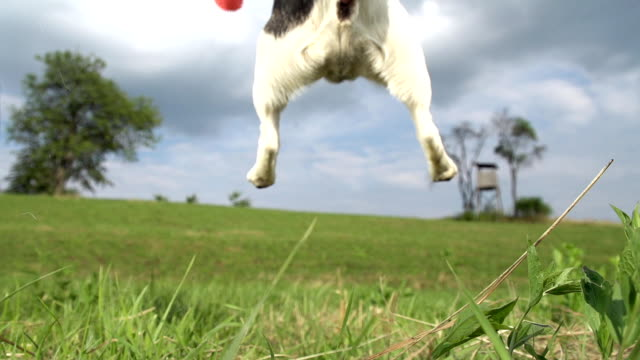 HD SUPER SLOW-MO: Dog Catching A Ball