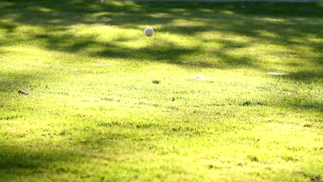 Hund fangen Ball