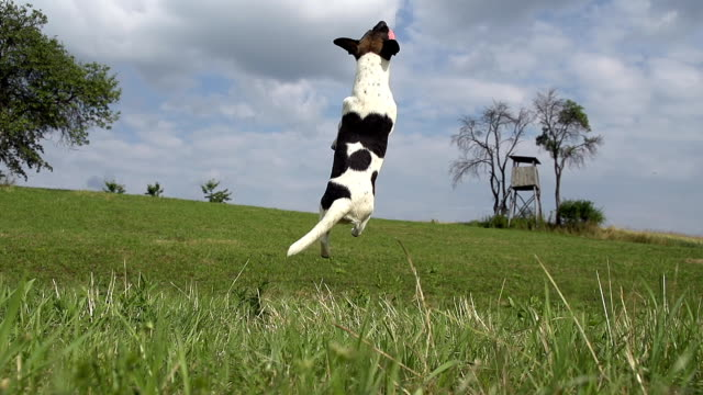 hd super slow-mo: dog catching the ball - pursuit sports competition format stock videos and b-roll footage