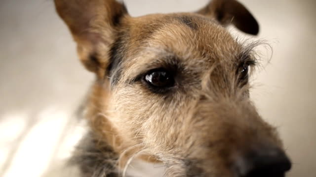 dog close up - brown stock videos and b-roll footage