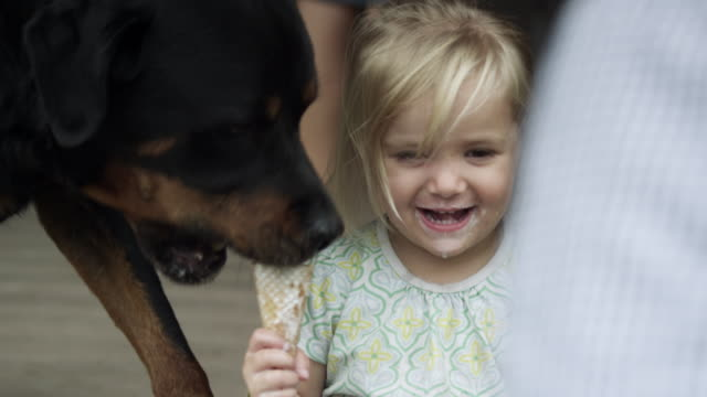 vidéos et rushes de dog comes from behind licking a girl's icecream cone. - lécher