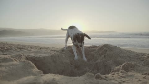 vídeos y material grabado en eventos de stock de perro cavando un hoyo en la arena - esconder