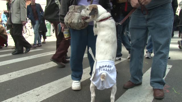 dog dressed up as new york's famous naked cowboy of times square nyc's annual easter bonnet parade at 5th avenue on april 08, 2012 in new york, new... - satire点の映像素材/bロール