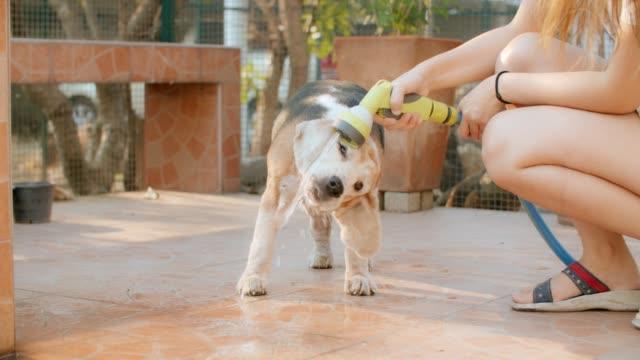 dog drinking water - animal nose stock videos & royalty-free footage