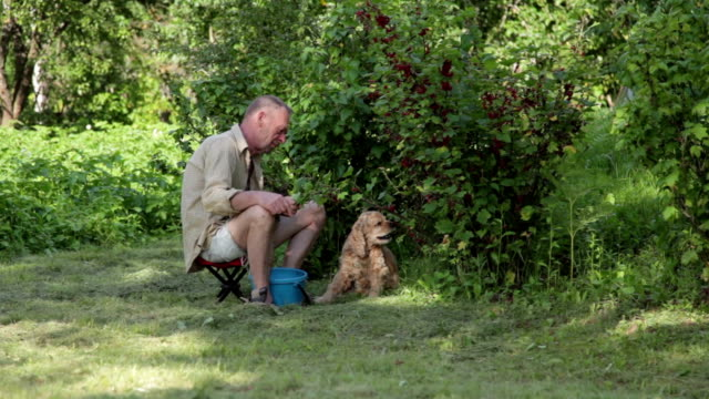 Dog eating berries from the bush while man picking them