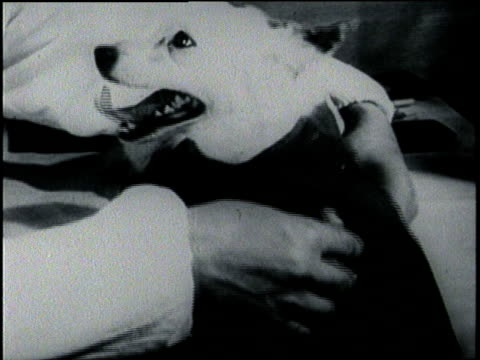 a dog flies into space in a spacecraft in 1957 - hundeartige stock-videos und b-roll-filmmaterial