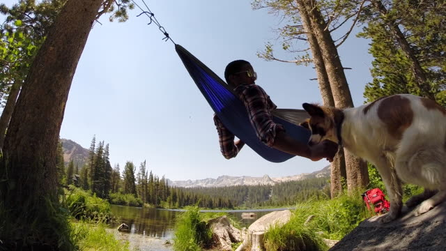 a dog gives his owner a high-five while he is resting in a hammock near a mountain lake. - mammoth lakes video stock e b–roll