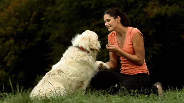 HD DOLLY: Dog Gives Paw To His Owner