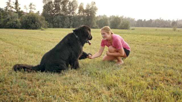 vídeos de stock, filmes e b-roll de slo mo cachorro dando uma pata ao dono dele feminino no prado - pata com garras