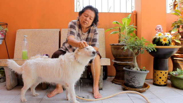 Dog Grooming by Grandmother