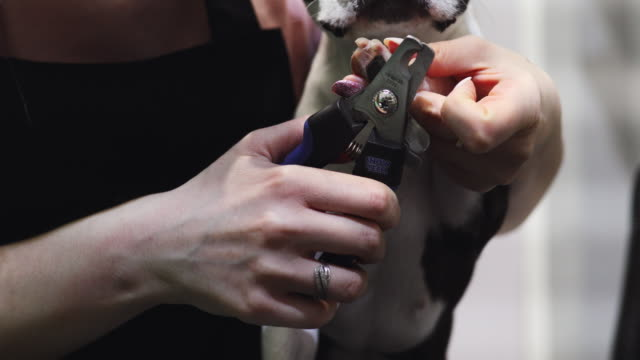 dog grooming - claw stock videos & royalty-free footage
