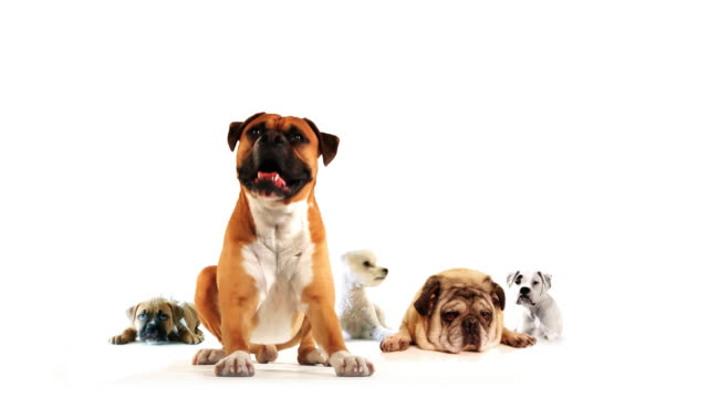 gruppo di cani - cinque animali video stock e b–roll