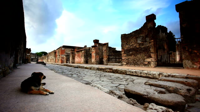 stockvideo's en b-roll-footage met dog guard in pompei - puin