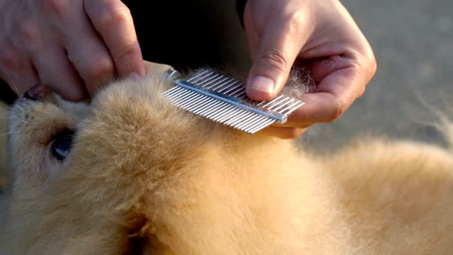 slo mo - dog hair brushing - brushing stock videos & royalty-free footage