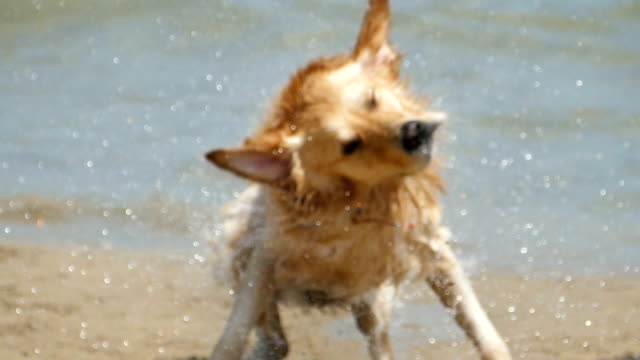 dog having fun on beach - wet stock videos & royalty-free footage