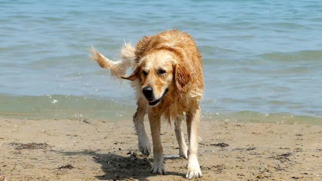 dog having fun on beach - dog stock videos and b-roll footage