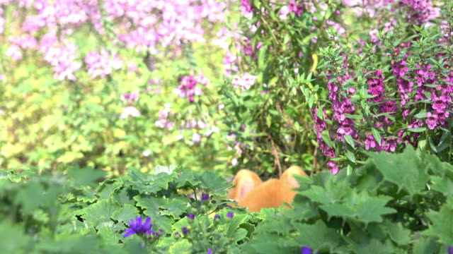 dog hide and seek playful in flowers garden, 4k - hide and seek stock videos and b-roll footage