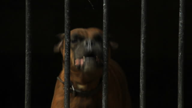 dog in a cage - bark stock videos & royalty-free footage