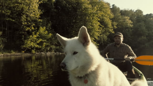 a dog in a canoe - pet owner stock videos & royalty-free footage