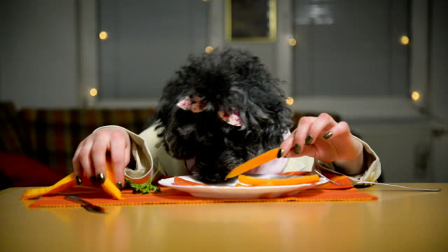 dog in a suit. - napkin stock videos & royalty-free footage