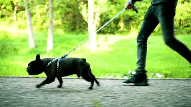 dog in a walk - small stock videos and b-roll footage