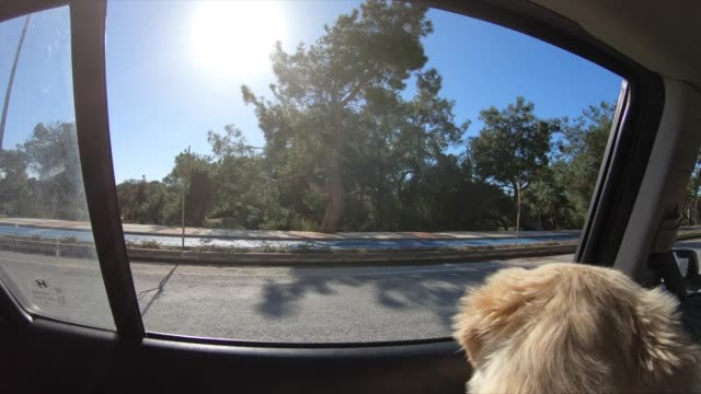 dog in car looking out  in coastline - land vehicle stock videos & royalty-free footage