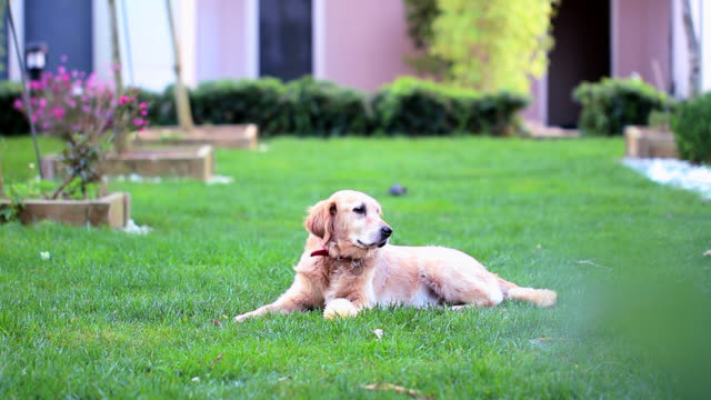 dog in garden - animal call stock videos & royalty-free footage