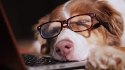 A dog in glasses sleeps near a laptop. Overstrain at work concept