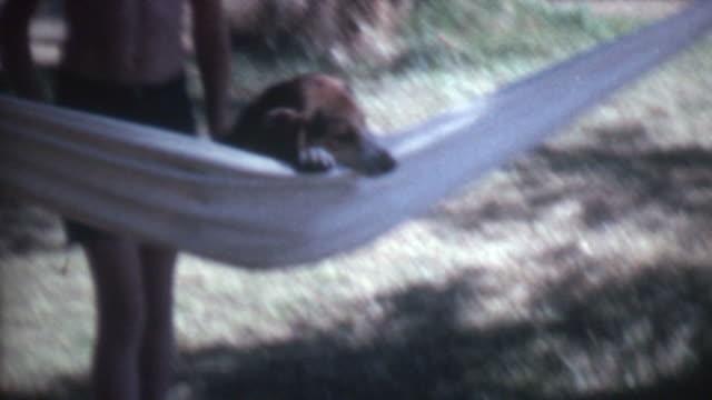 Dog In Hammock 1972